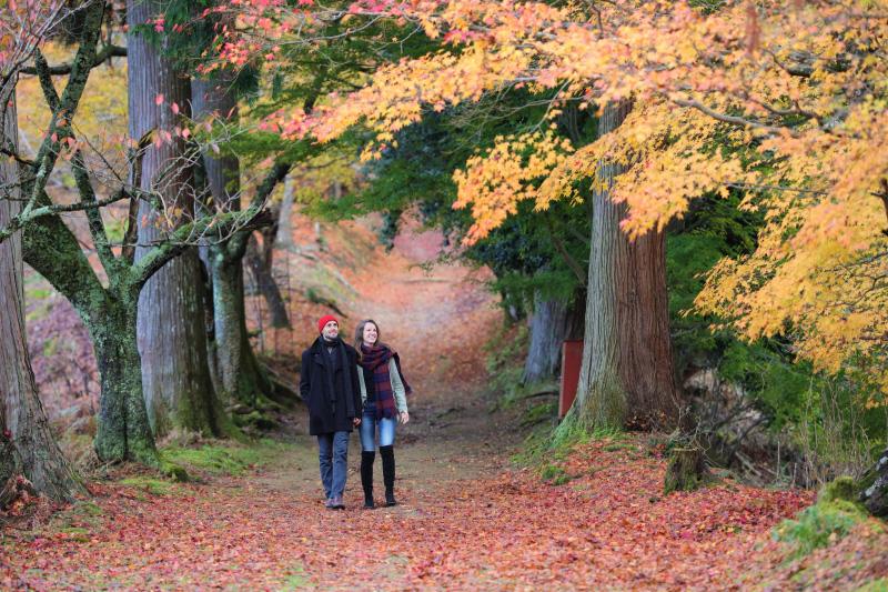 秋の観光情報「紅葉だより」の発信を開始します